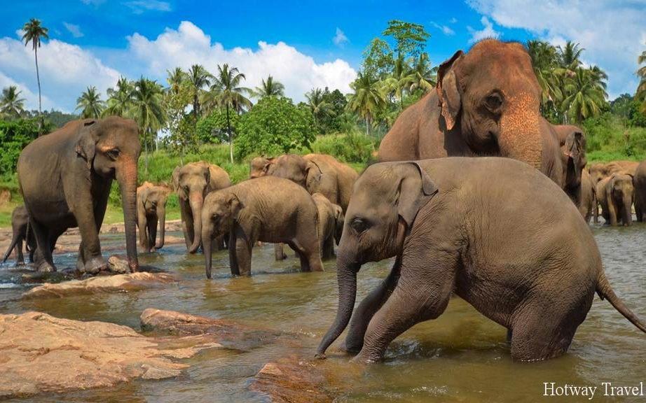 Туры на Шри-Ланку слон2