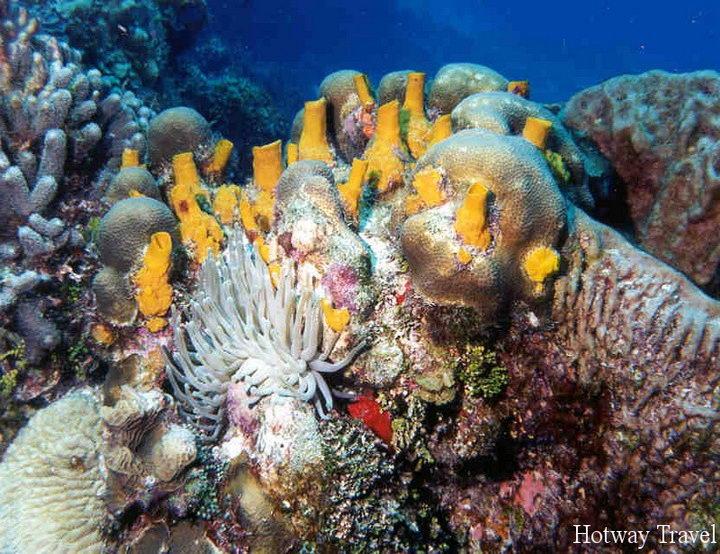 Туры в Мексику подводный мир