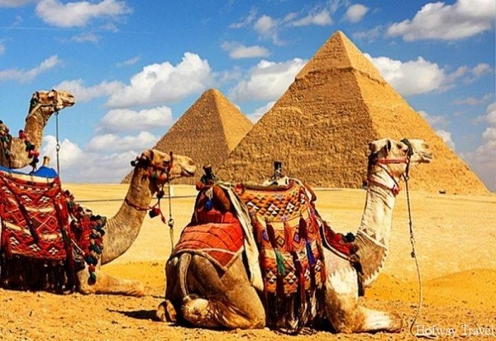 Туры в Египет апрель верблюды