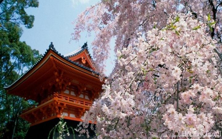 Туры в Китай в апреле цветение