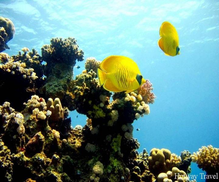 Туры в апреле 2015 года в Эль Кусейр рыбка