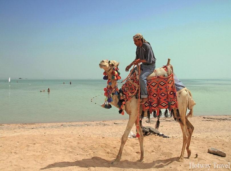 Туры в апреле 2015 года в Эль Кусейр верблюд
