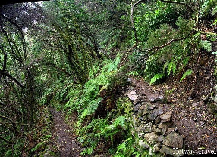 Туры в апреле на Канарские острова лес