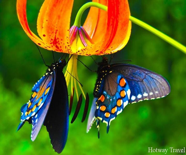 Туры в Фетхие в мае бабочки1