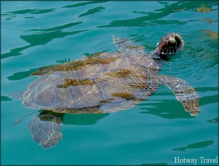 Туры в Фетхие в мае черепаха