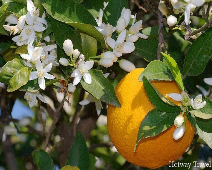 Туры в Марокко в мае апельсин