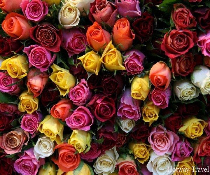 Туры в Марокко в мае розы