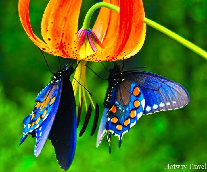 Туры в Турцию в мае 2015 бабочка