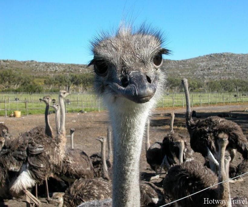 Отдх на Кипре в июне страус