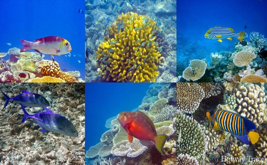 Отдых в Египте в июле Красное море