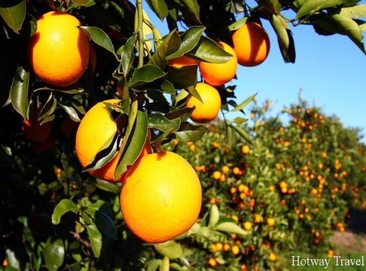 Отдых в Италии в июле апельсин