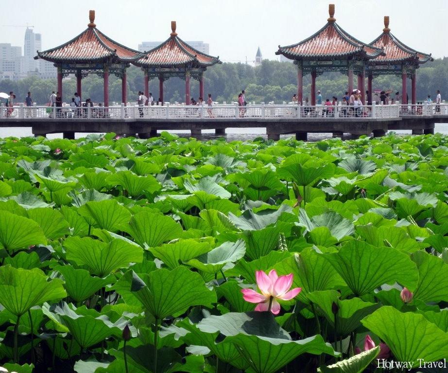 Отдых в Китае в июне лотос