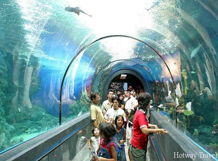 Отдых в Таиланде в июне аквариум