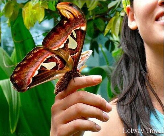 Отдых в Таиланде в июне бабочка