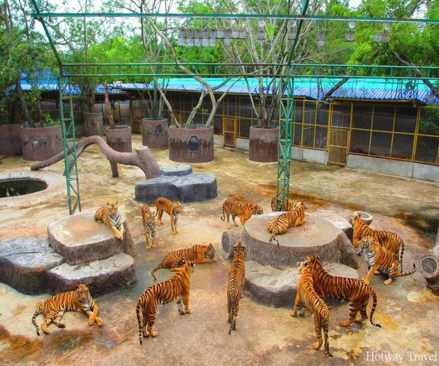 Отдых в Таиланде в июне зоопарк
