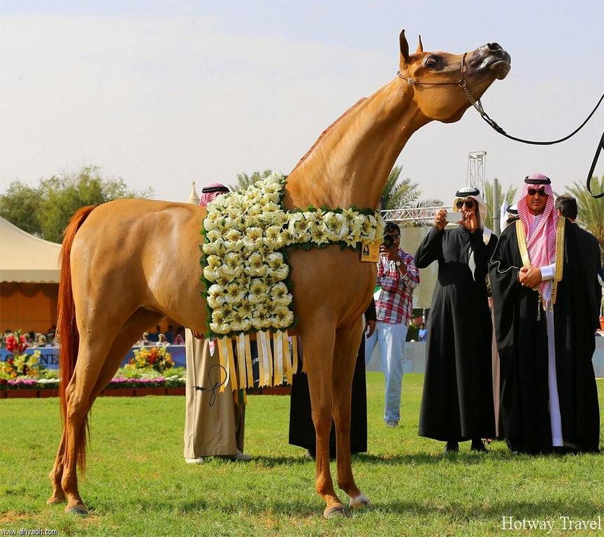 Отдых в Тунисе в июне фестиваль лошадей
