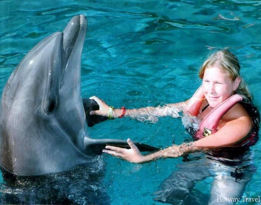 Отдых в июле 2015 на Мальте делтфины
