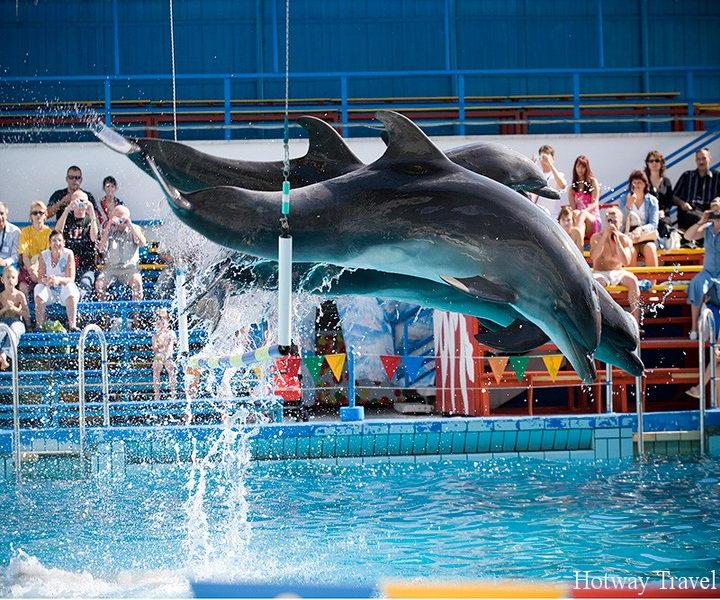 Отых в Турции в августе дельфинарий
