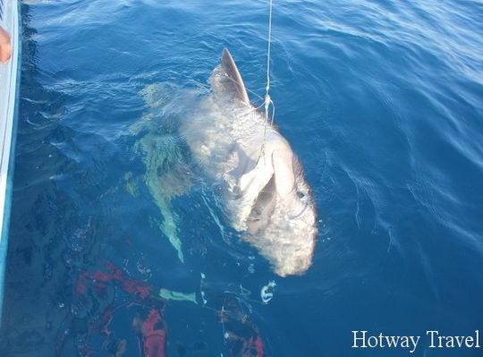 Отдых в Анталии в августе акула