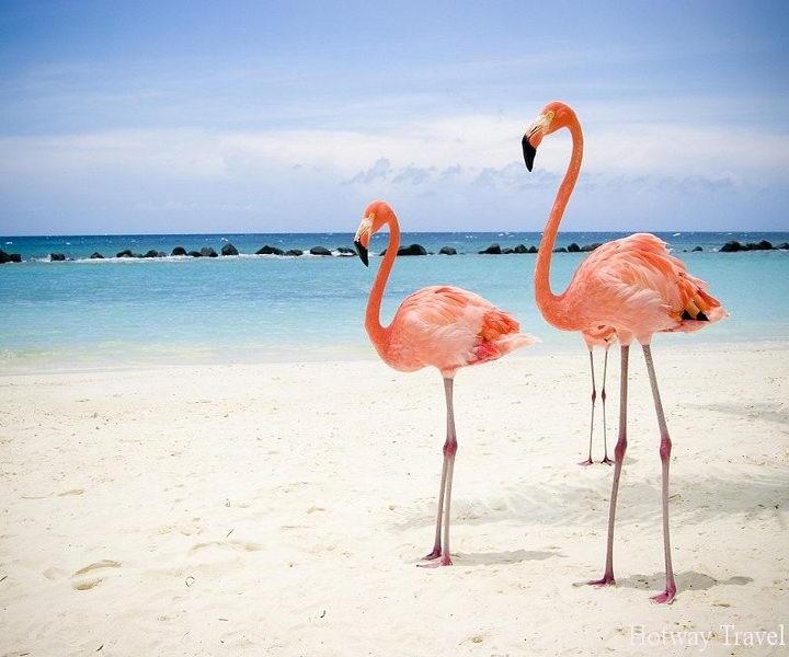 Отдых в Тунисе в августе фламинго