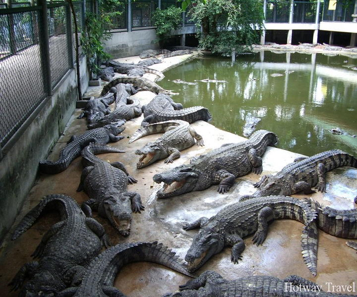 Отдых в Тунисе в августе крокодил