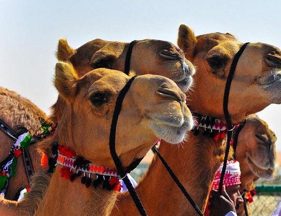 Туры из Житомира в Эмираты в январе l2