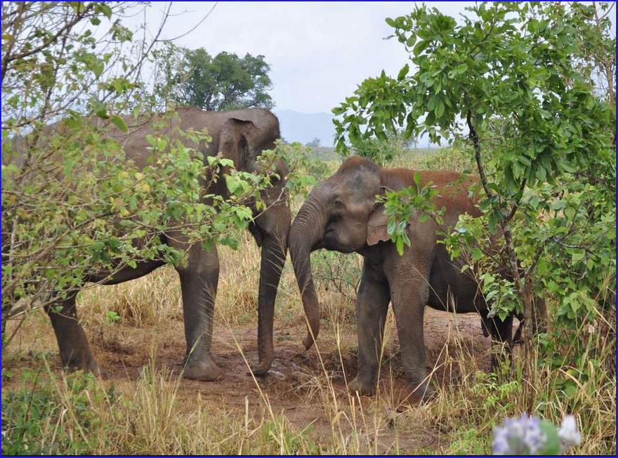 Туры из Житомира на Шри-Ланку в январе _11