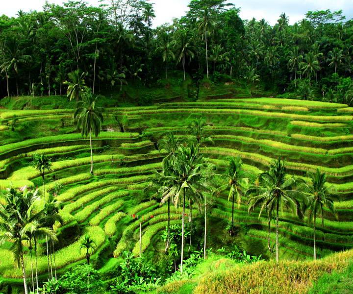 Туры из Житомира в феврале на Бали 03